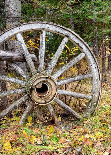 Wagon Wheel -Gloria Melnychuk