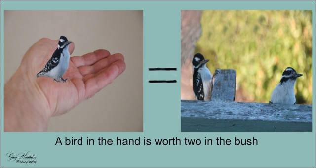 A bird in the hand-