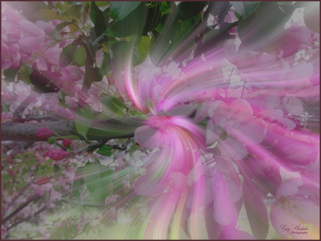 Cherry Blossom Twirl-Gary Hardaker