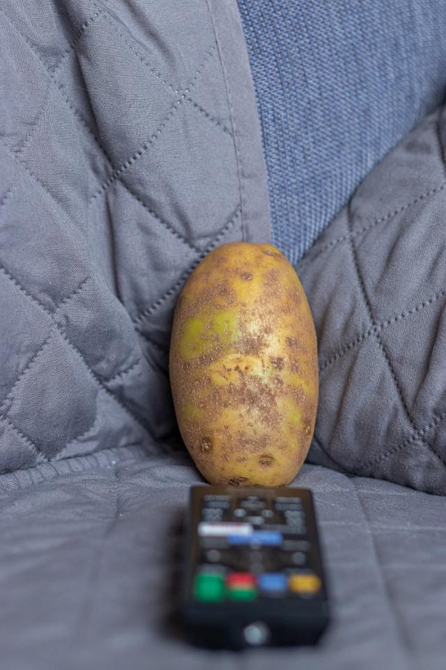 Couch potato ©Tamara Isaac