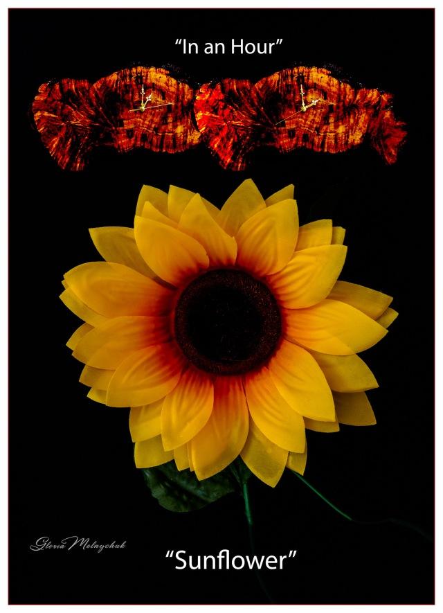 In an Hour Sunflower - Gloria Melnychuk