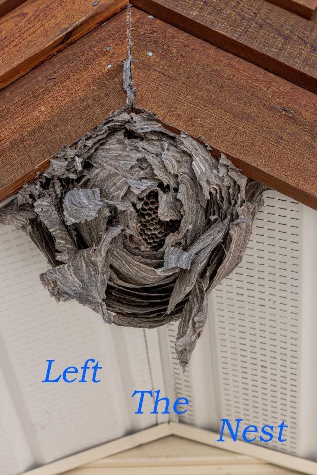Left-the-Nest