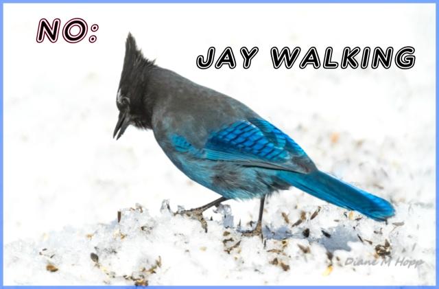 No Jay Walking
