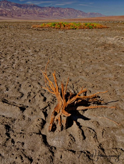 Salt Flats Death Valley-4666