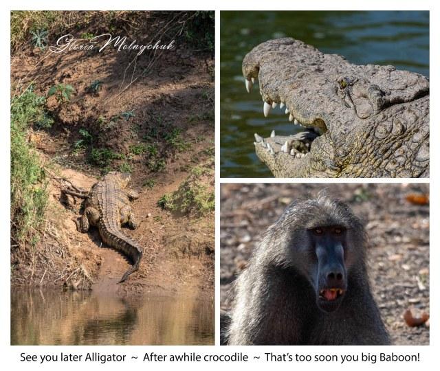 See you later Alligator - Gloria Melnychuk