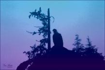 Eagle Silhouette- Gary Hardaker