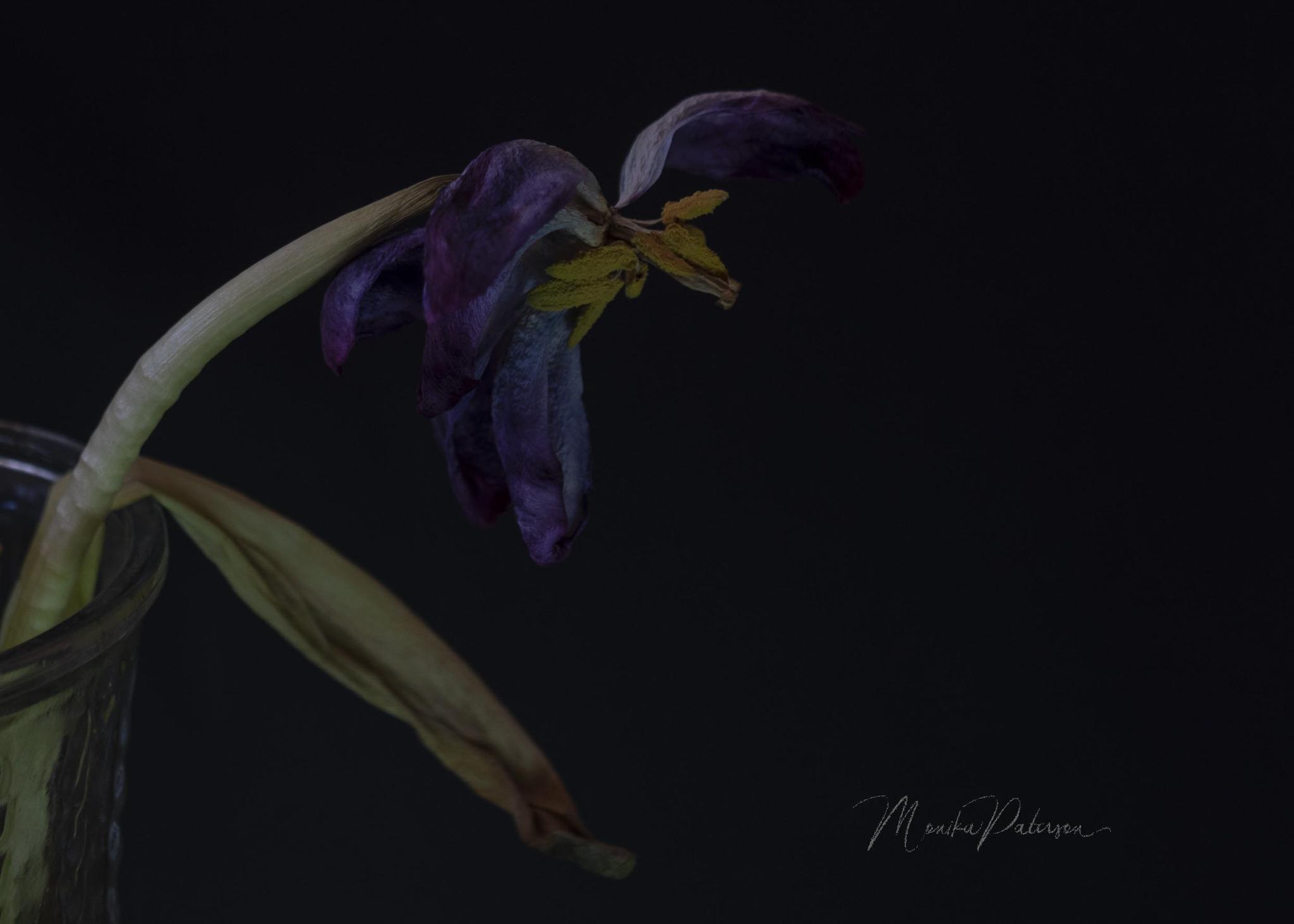 Monika Paterson_MP7_2625 dry purple tulip edit sm wm- Small