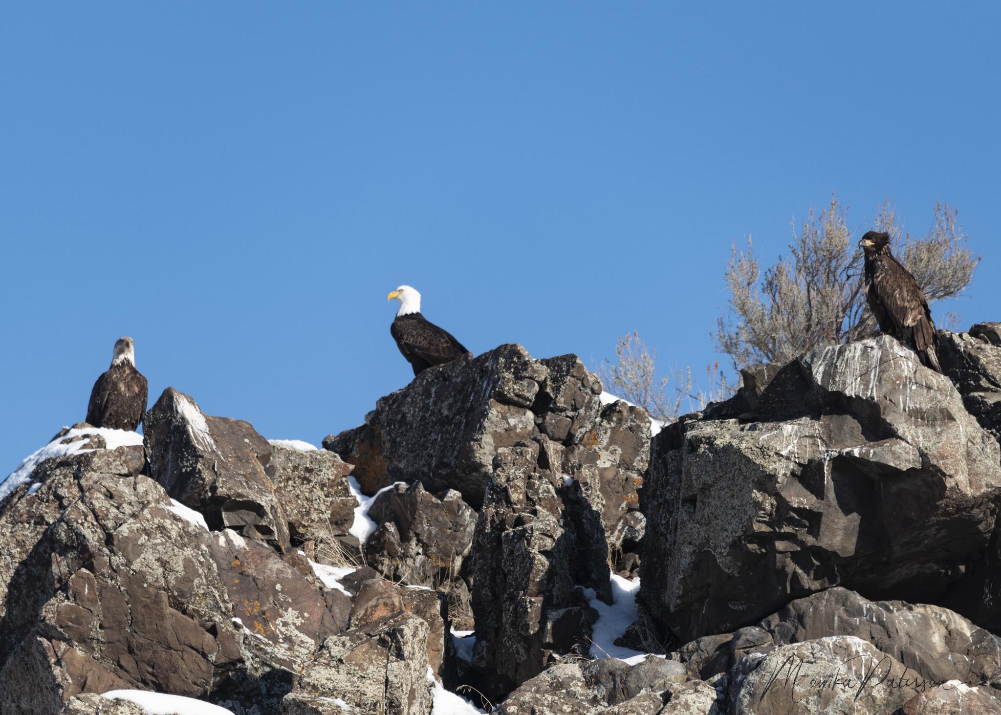 MP7_2067 eagles edit sz sm-2