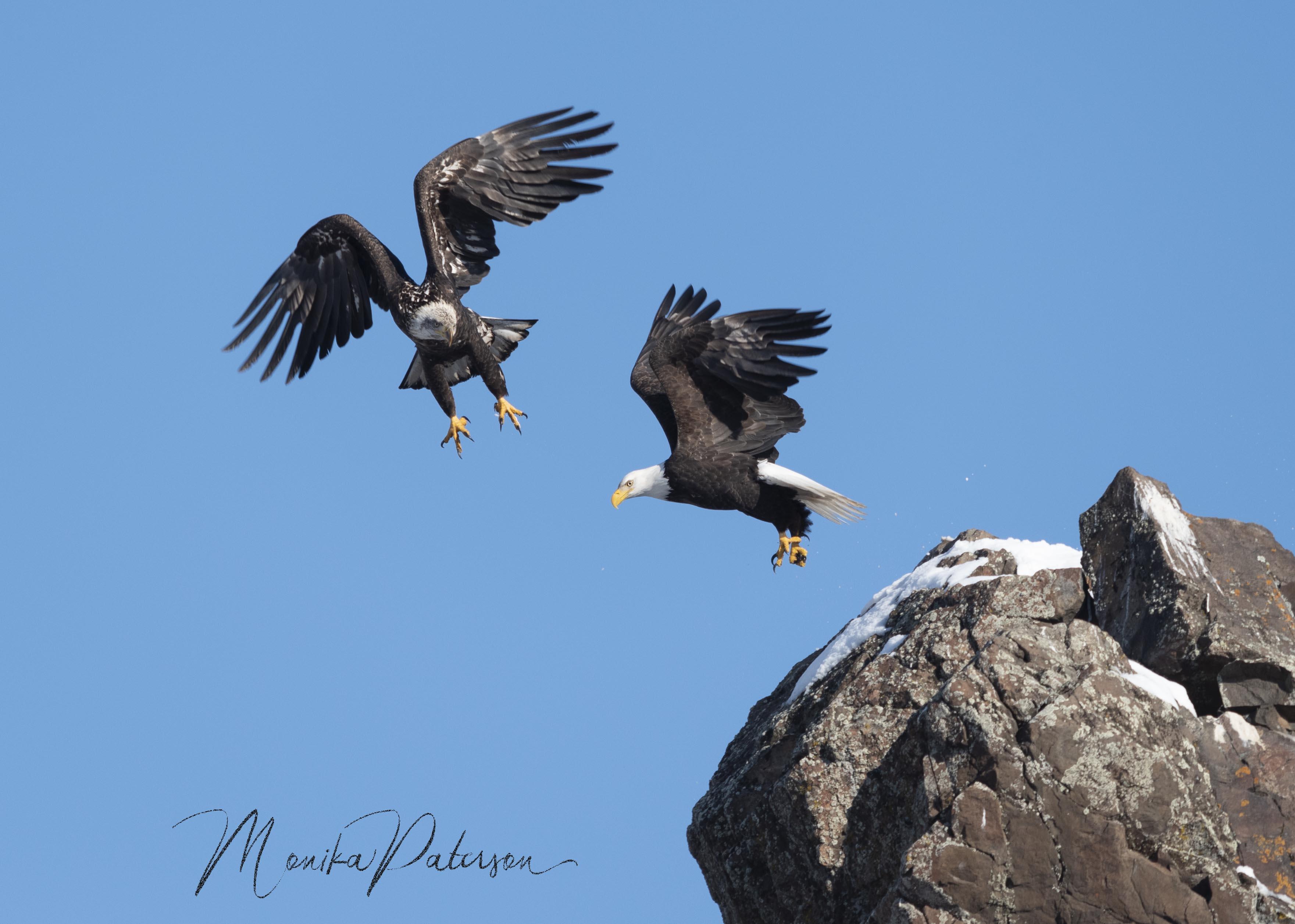 MP7_2069 eagles edit sz sm