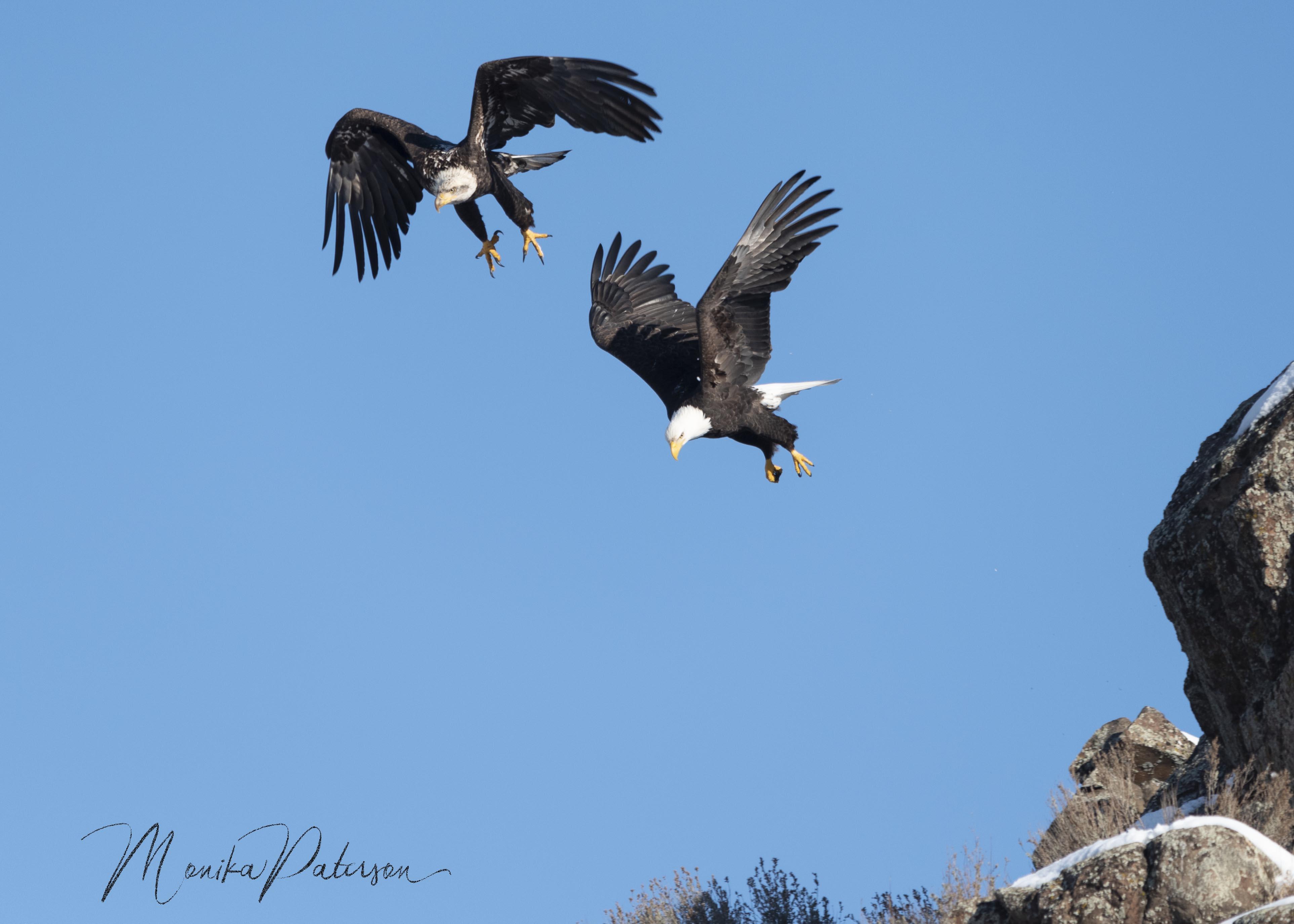 MP7_2070 eagles edit sz sm