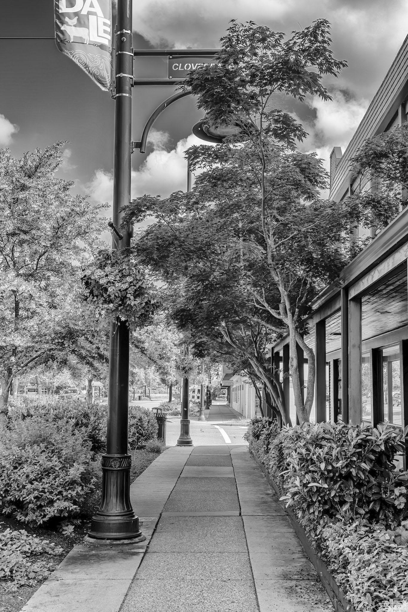 Cloverdale Street in BW - Carol Jackson