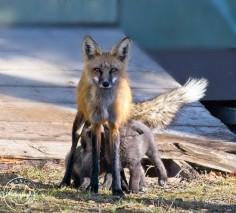 Fox Nursing - Nancy Cunningham
