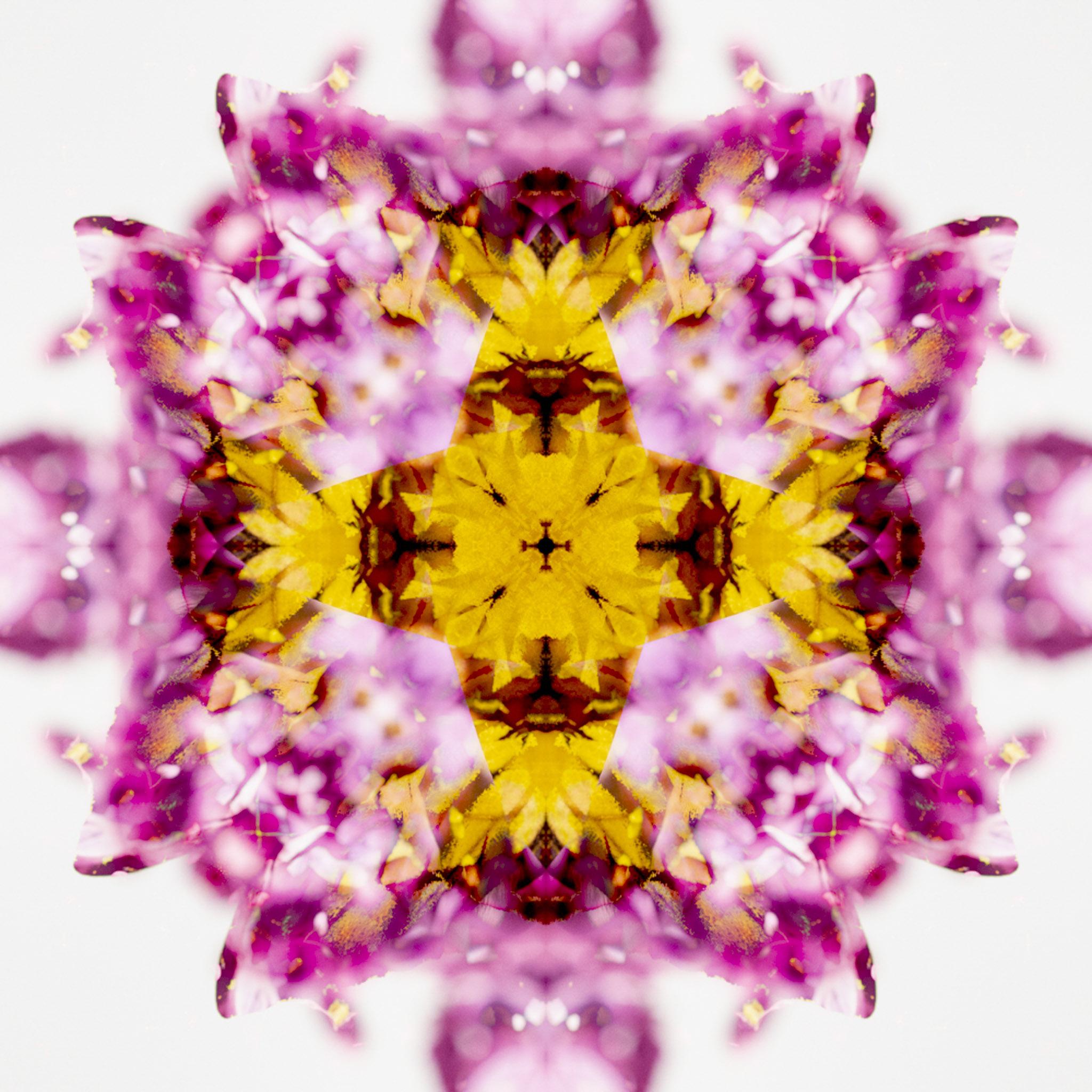 Mandala from Tiger Swallowtail on Lilac - DMH
