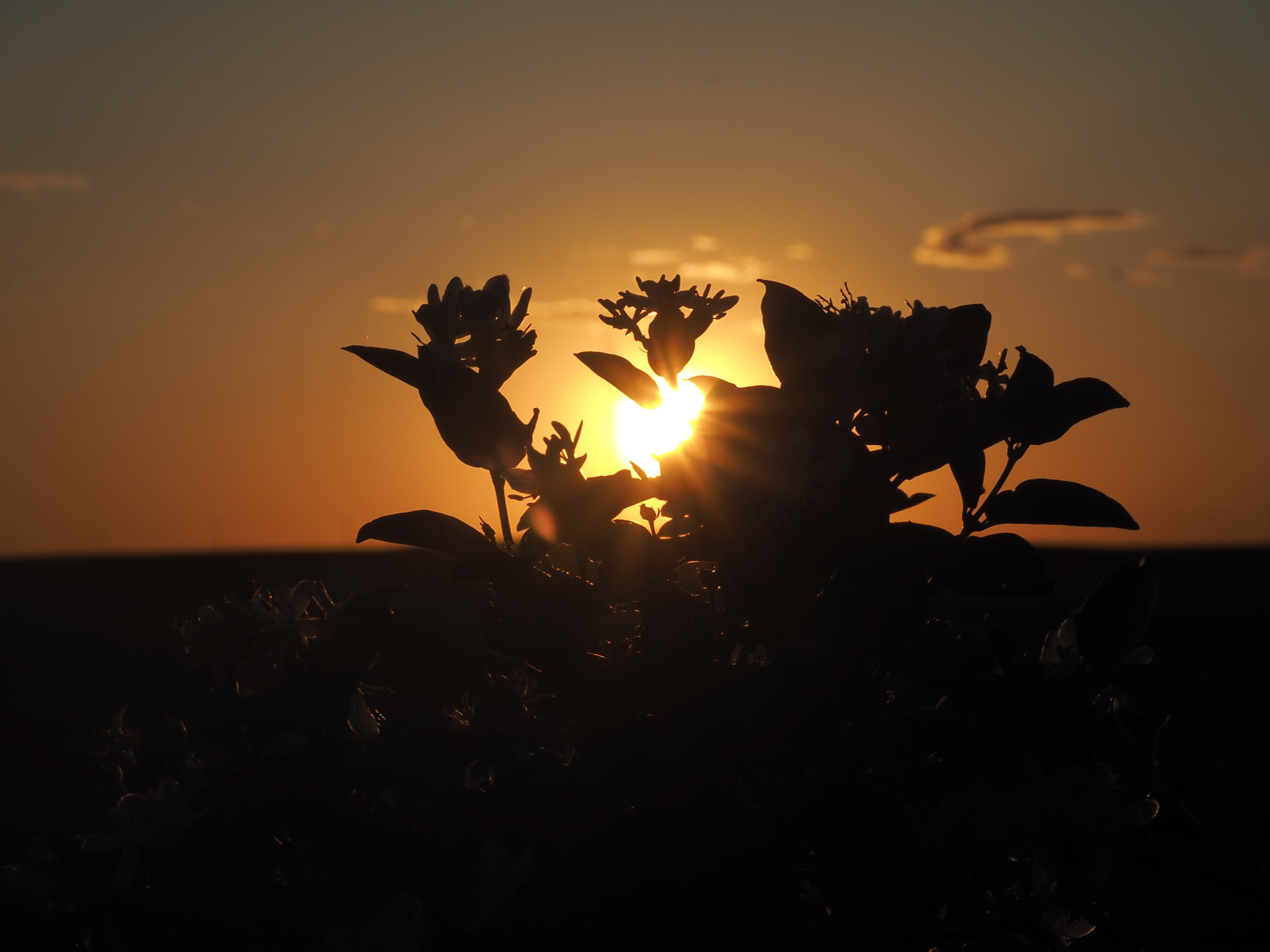 Saskatchewan Sunset 3 - Kevin Haggkvist