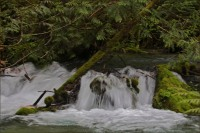 White Water- Upper Chilliwack River- Gary Hardaker