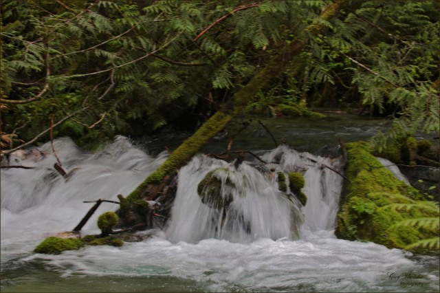 White Water- Upper Chilliwack River- Gary Hardaker