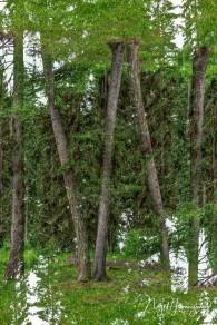 Strange Trees - Nigel Hemingway