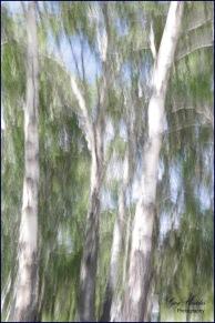 Aspen Abstraction- Gary Hardaker