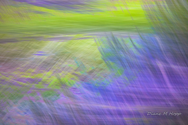 Brush Strokes of Grasses - DMHopp