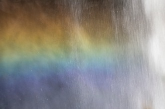 Canim Rainbow - Daryl Bell