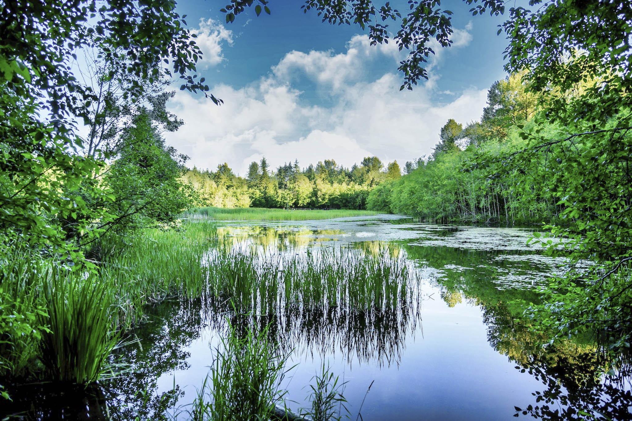 CJJ-Green Timbers Pond