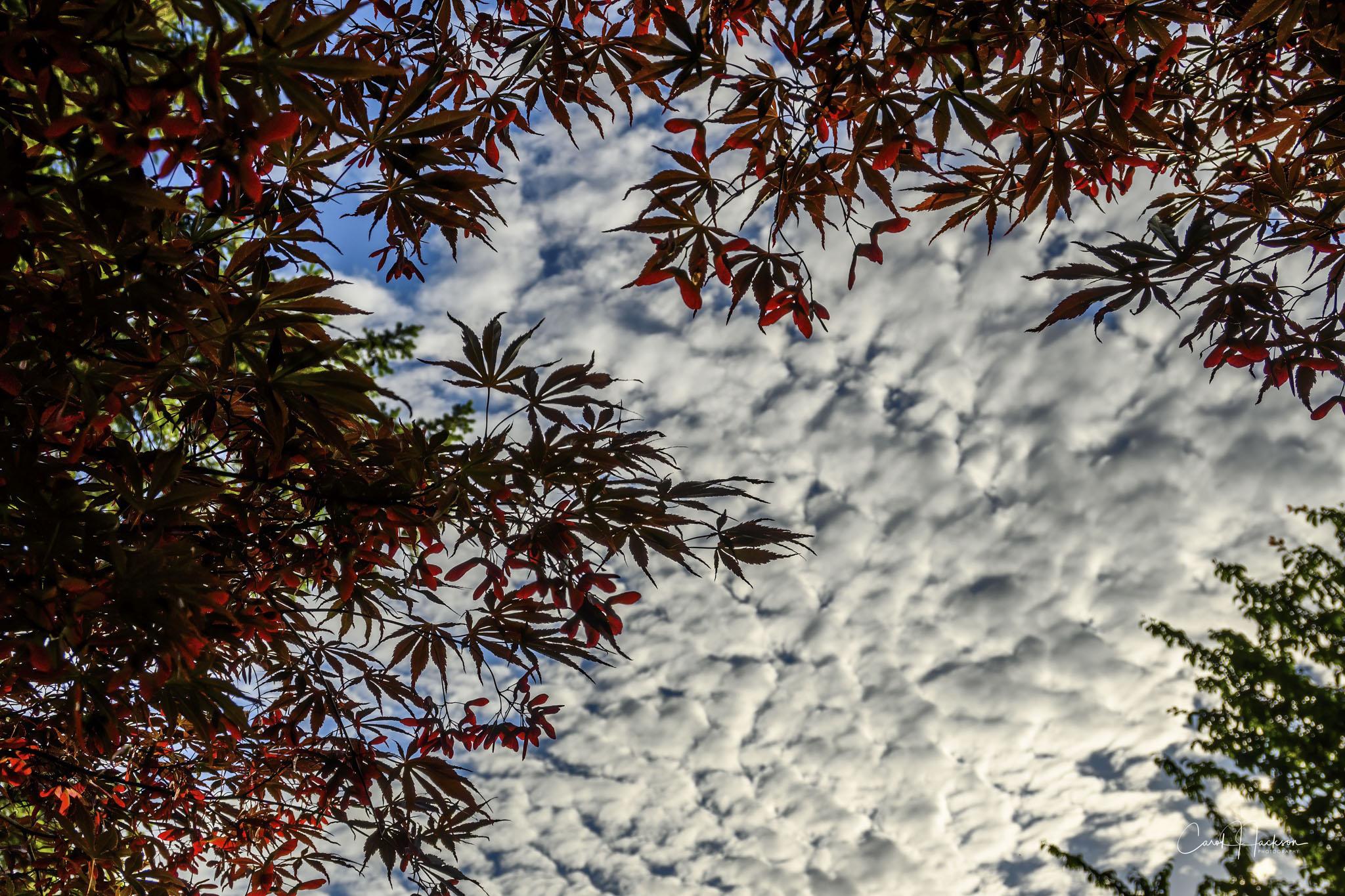 CJJ-Looking Up