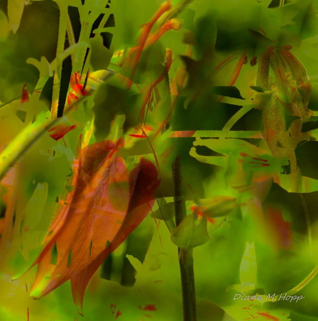 Columbine Abstract - DMHopp