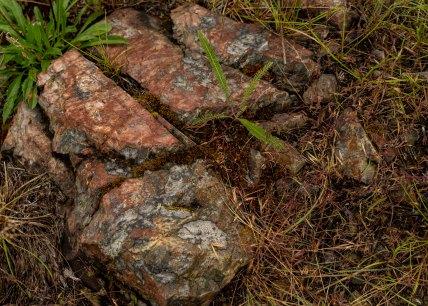 Rocks and Lichen at Cougar Point - Derek Chambers