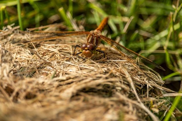 Dragonfly - Tamara Isaac