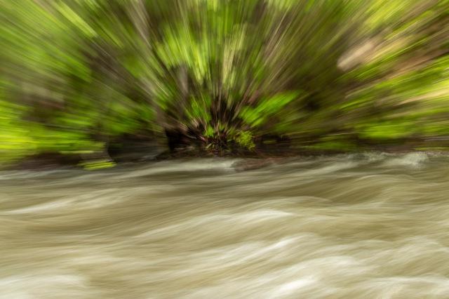Forest burst - Tamara Isaac