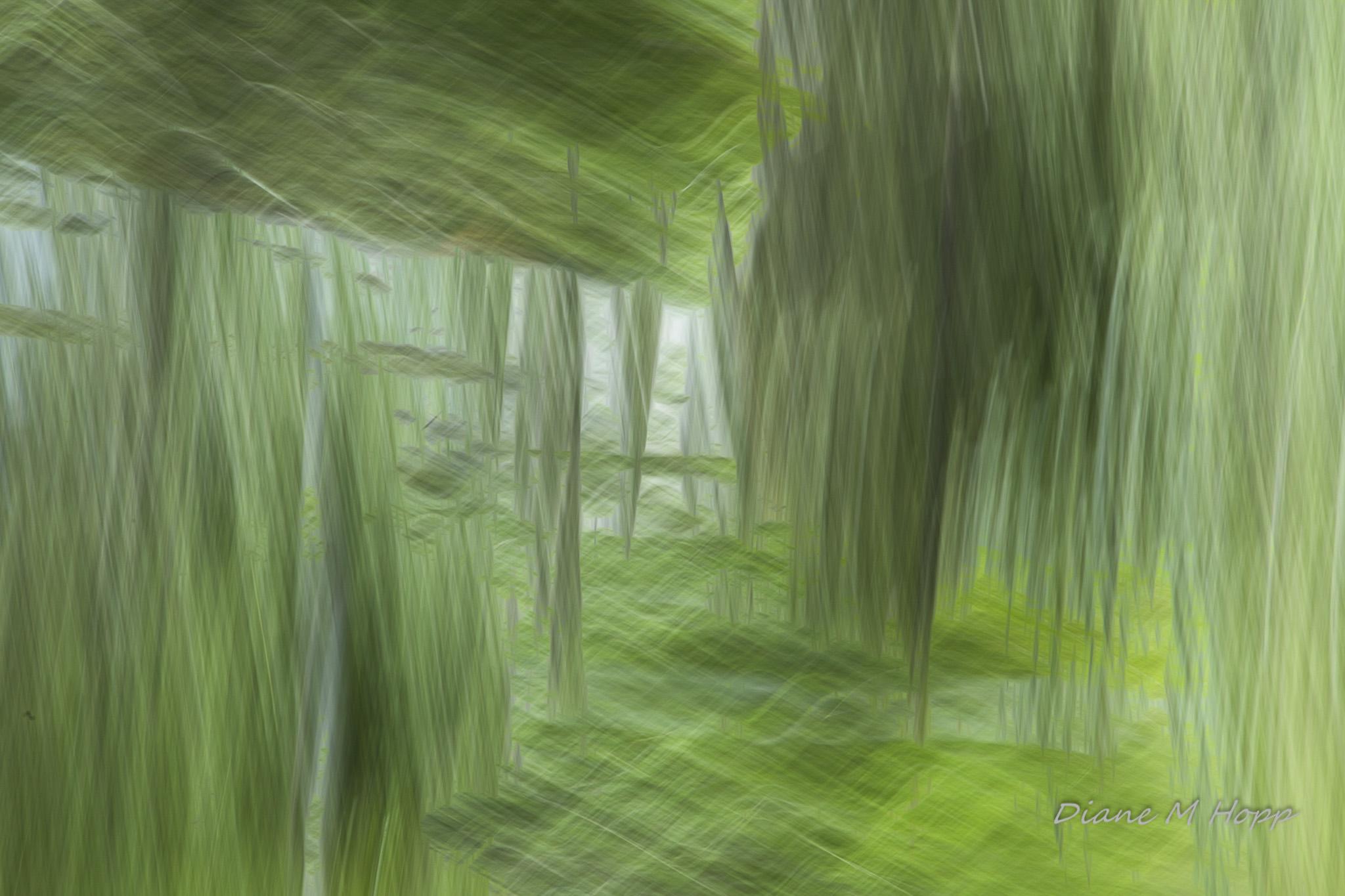 Hanging Trees - DMHopp-1 - Copy