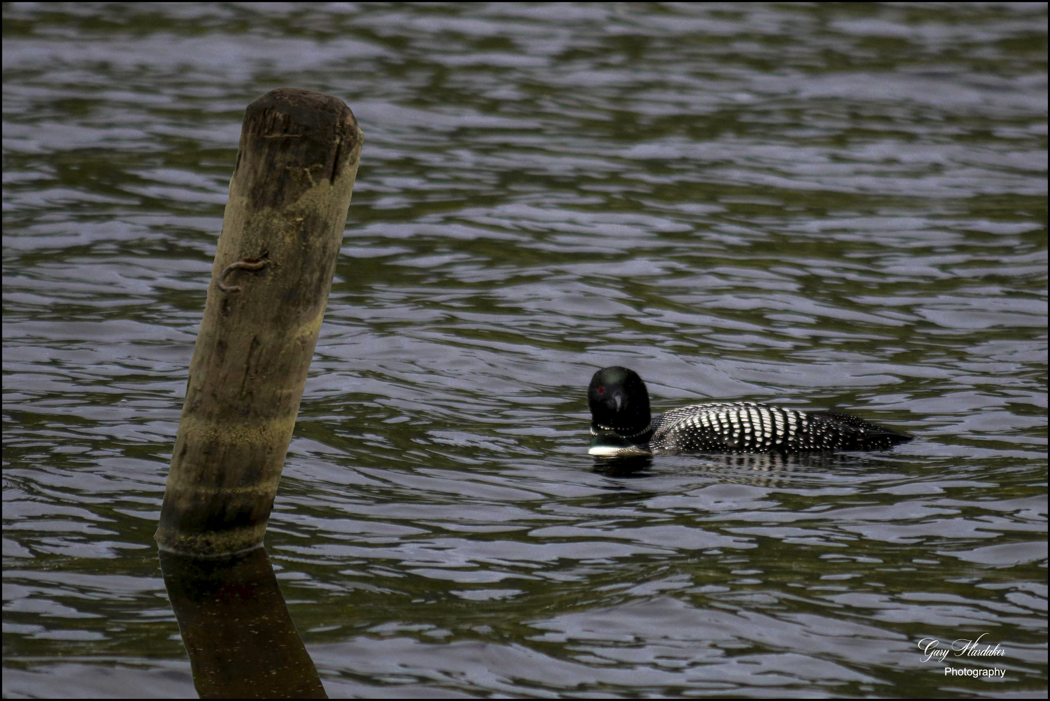 Loon at South Point Resort