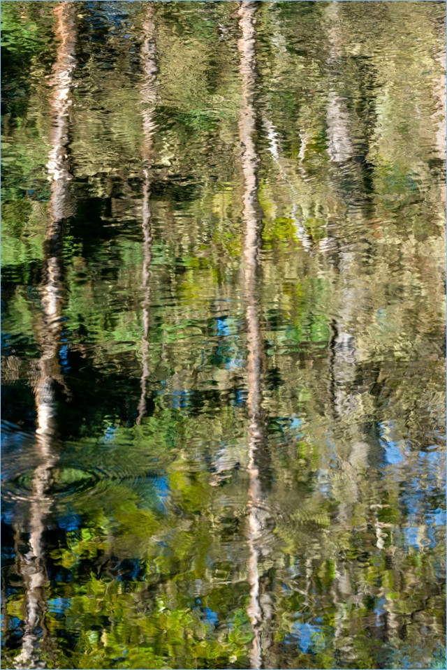 Monet Visits the Beaver Pond © Larry Citra