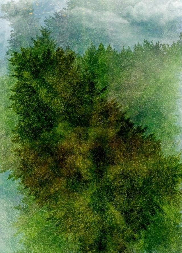 Tree line - Tamara Isaac