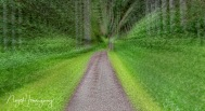 Zooming-down-the-trail
