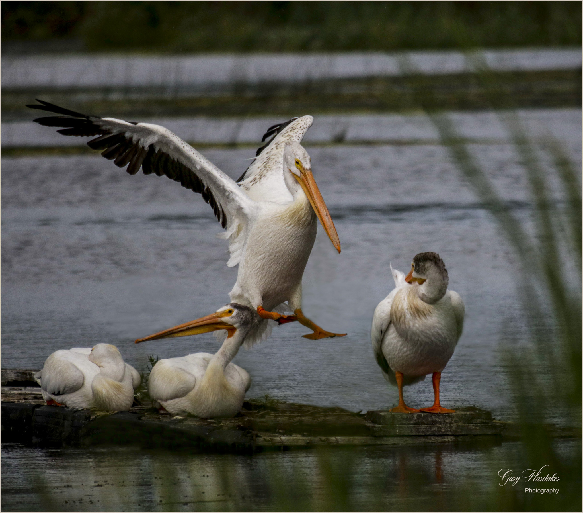Coming in for a Landing (move over)- Gary Hardaker