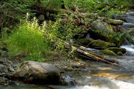 S1412 - Eakin Creek Provincial Park - Derek Chambers