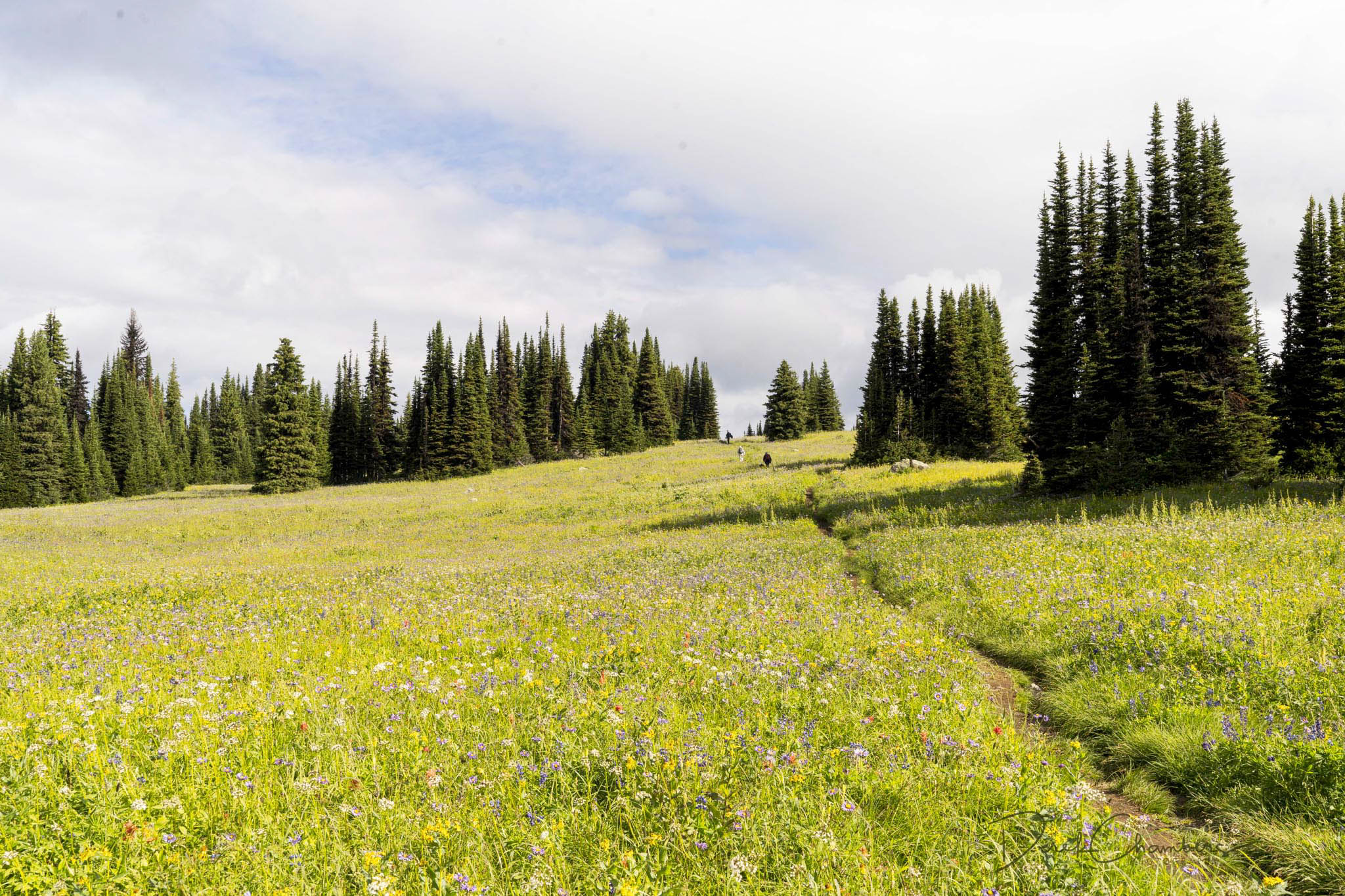 The Trail through the Trophy Mountain Meadows - Derek Chambers