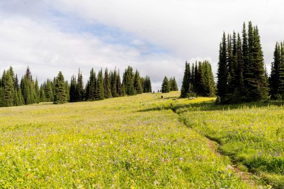 The Trail through the Trophy Mountain Meadows - Derek Chambers