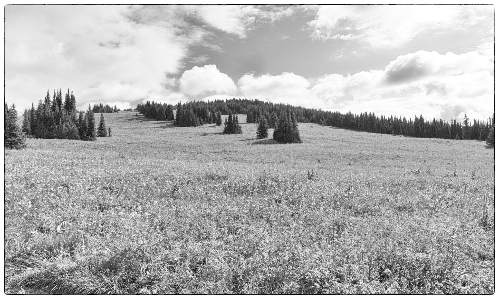 Trophy Mountain Meadows - Derek Chambers