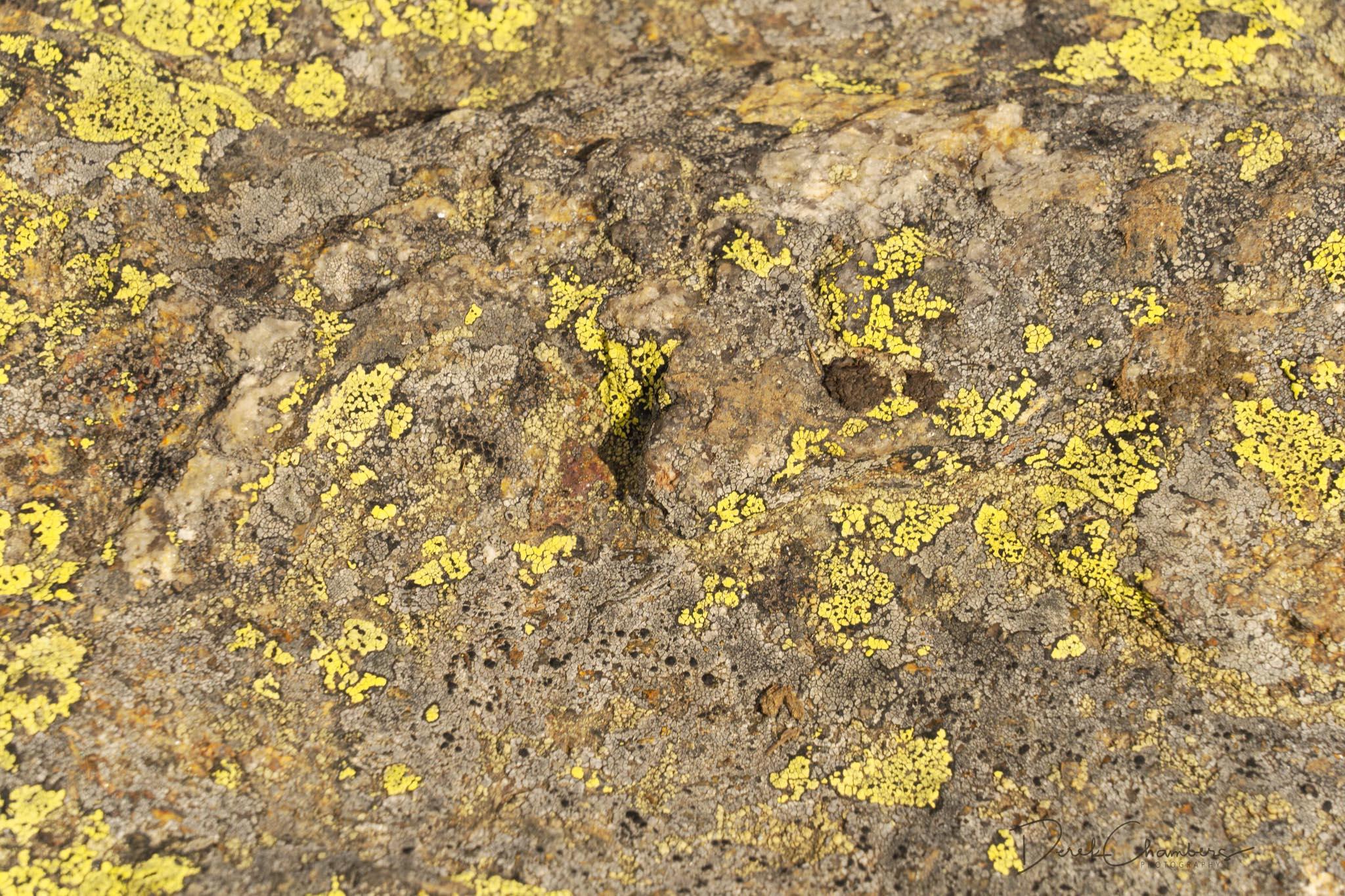 Lichen on the Rock - Trophy Mountain Meadows - Derek Chambers