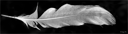 Feather 2 © Larry Citra