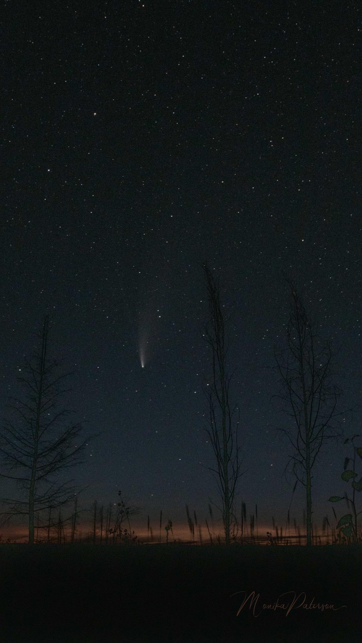 Comet Neowise through the trees - Monika Paterson
