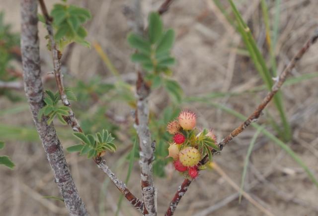 Pokey Berries - Kevin Haggkvist
