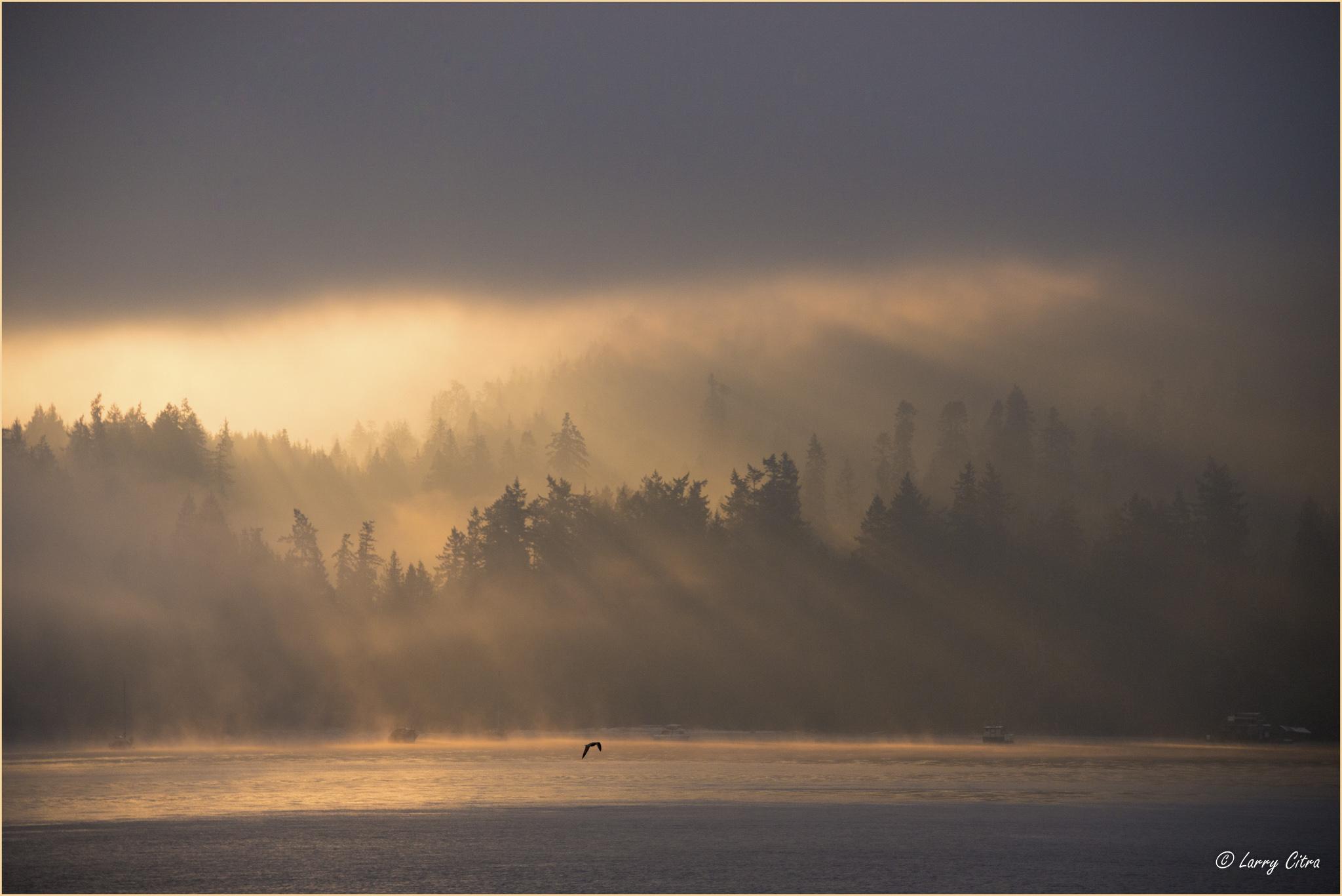Sunrise, Burgoyne Bay, Salt Spring Island_Stroked © Larry Citra