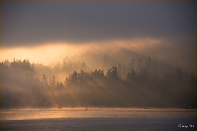 Sunrise, Burgoyne Bay, Salt Spring Island_Stroked © Larry Citra