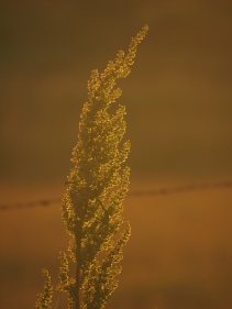 "Sunset ""Doc"" - Kevin Haggkvist"