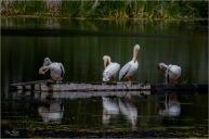 The Pelican-Brief-Encounter- Gary Hardaker