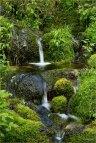 Trophy Mt Stream © Larry Citra
