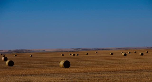Bales in Field - Kevin Haggkvist